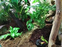 Neue Pflanzen