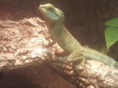Neues Männchen am Sonnen