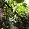 Pflanzen im Wasseragamen Terrarium