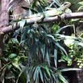 Pflanzen für Wasseragamen