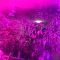 Pflanzenlicht LED
