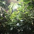 Pflanzen Wachstum 2018